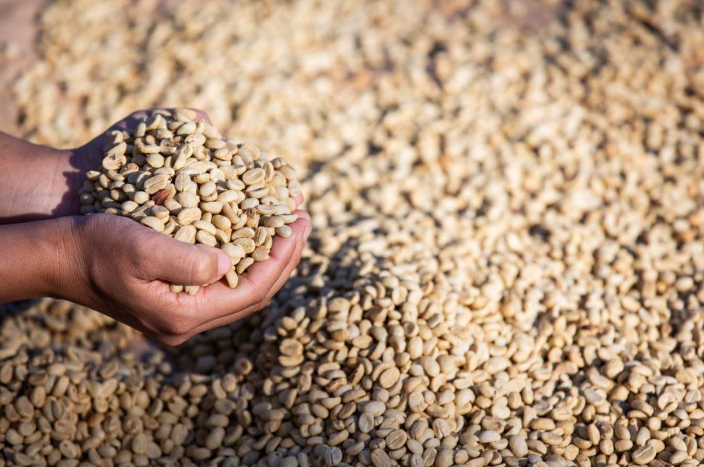 Brasil de Sucesso - Conab indica que Brasil terá segunda maior safra de grãos da história